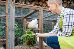 Młoda kobieta karmi ona bezpłatnych pasmo kurczaki Jajeczne kłaść karmazynki i młody żeński rolnik target1440_1_ zdrowy organiczn zdjęcie stock