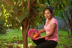 Młoda kobieta na cacao żniwie zdjęcie royalty free