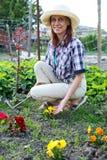 Młoda kobieta odchwaszcza łóżka z kwiat altówką w ogródzie Fotografia Stock