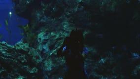 Młoda kobieta ogląda egzotycznej ryba brać selfie z telefonem komórkowym w akwarium 3840x2160 zdjęcie wideo