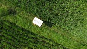 Młoda kobieta outdoors z whiteboard i handwriting słowem tropikalnym na nim Trutnia latający materiał filmowy Zielony jaskrawy tr obrazy royalty free