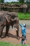 Młoda kobieta podróżnik karmi słonia Zdjęcie Stock