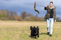 Młoda kobieta rzuca kij dla jej psa pościg fotografia stock