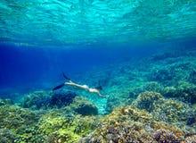 Młoda kobieta snorkeling w pięknej rafie koralowa z udziałami Zdjęcie Royalty Free