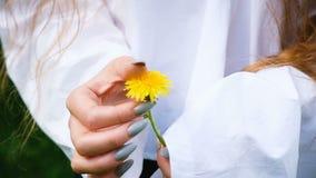 Młoda kobieta w białej koszula trzyma żółtego dandelion kwiatu w ona ręki zakończenie, zwolnione tempo zdjęcie wideo