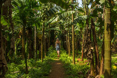 Młoda kobieta w dżungli w tropikalnej pikantności plantaci, Goa, Ind zdjęcia stock