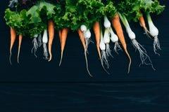Młoda marchewka, cebula i sałatka, Gotować z świeżymi warzywami Fotografia Royalty Free