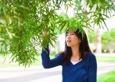 Młoda nastoletnia dziewczyna outdoors, dosięgający do dotyka opuszcza na drzewie Obraz Royalty Free