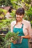 Młoda ogrodniczka z bonsai zdjęcia stock