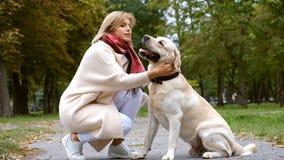 Młoda piękna blondynka bawić się z jej labradorem w spadku w parku zbiory
