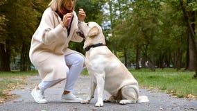 Młoda piękna blondynka bawić się z jej labradorem w spadku w parku zdjęcie wideo