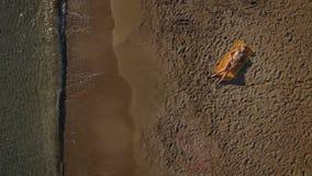 Młoda piękna brunetka kłaść na koc na plaży i sunbathing zbiory wideo