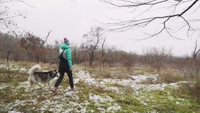 Młoda piękna kobieta chodzi z jej Łuskowatym psem przy zimą wokoło lasowego zwolnionego tempa zbiory
