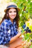 Młoda piękna kobieta zbiera winogrona w winnicy podczas harve Fotografia Royalty Free