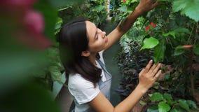 Młoda przedsiębiorca kwiaciarnia cieszy się kwiaty kwitnie w mój szklarni zbiory