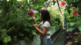 Młoda przedsiębiorca kwiaciarnia cieszy się kwiaty kwitnie w mój szklarni zbiory wideo
