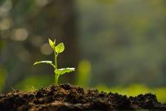 Młoda roślina zdjęcie stock