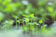 Młoda roślina Zdjęcia Royalty Free