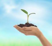 Młoda roślina kiełkuje od ziemi Zdjęcia Stock