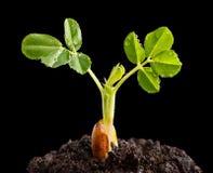 Młoda roślina po deszczu Obraz Stock