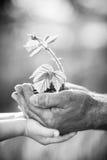 Młoda roślina przeciw zielonemu tłu Fotografia Royalty Free