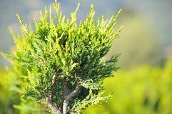 Młoda roślina r w pepinierze Zdjęcia Stock