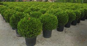 Młoda roślina r w pepinierze Obraz Stock