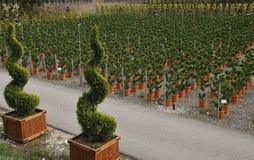Młoda roślina r w pepinierze Obrazy Royalty Free