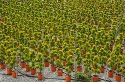 Młoda roślina r w pepinierze Fotografia Stock