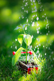 Młoda roślina w wózek na zakupy Zdjęcie Stock