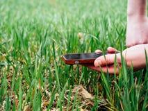Młoda rolnictwo kobiety biolożka sprawdza żniwo zdjęcia royalty free