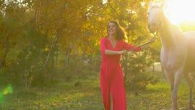 Młoda romantyczna dziewczyna w czerwieni sukni odprowadzeniu z białym koniem przeciw słońcu Kobieta jeździec z jej ogierem w jesi zbiory wideo