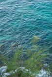 Młoda sosna przy falezy wybrzeża Selekcyjną ostrością Zdjęcie Stock