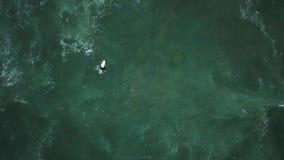 Młoda surfingowiec dziewczyna szuka dla fal zdjęcie wideo