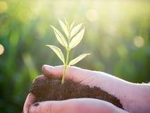 Młoda zielona roślina w rękach nowe życie koncepcja ekologii obrazów więcej mojego portfolio obrazy royalty free