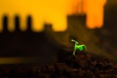 Młoda zielona roślina w ziemi na tło nafcianej kołysa maszynie Zdjęcia Stock