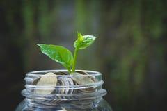 Młoda zielona roślina z monetą w słoju dla narastającego biznesu Obrazy Stock