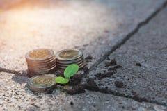 Młoda zielona roślina z sterty monetą na ziemi dla narastającego biznesu Zdjęcie Royalty Free