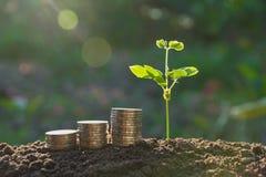 Młoda zielona roślina z sterty monetą na ziemi dla narastającego biznesu Obrazy Stock