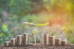 Młoda zielona roślina z sterty monetą na ziemi dla narastającego biznesu Fotografia Stock