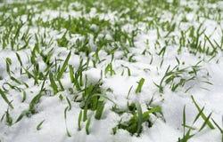 Trawa w śniegu Obraz Royalty Free