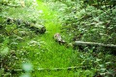Młoda zielona trawa w drewnach zdjęcie stock