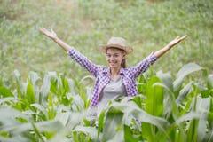 Młode średniorolne szczęśliwe i stawiać ręki up w kukurydzanym polu pojęcie obrazy stock