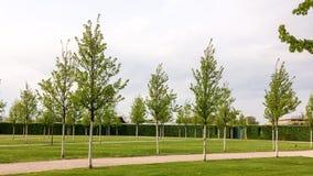 młode drzewa zdjęcie stock