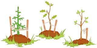 młode drzewa ilustracja wektor