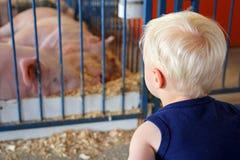 Młode Dziecko Patrzeje świnie przy okręgu administracyjnego jarmarkiem Zdjęcia Stock