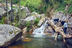 Młode dziewczyny z przygoda psem na rzece z siklawą i spadać drzewnym bagażnikiem wśrodku wody obraz stock