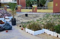 Młode kwietnikowe rośliny w pudełkach przygotowywających dla zasadzać zdjęcia royalty free