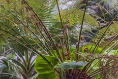 młode narastające rośliny Zdjęcie Royalty Free