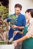 Młode ogrodniczki z bonsai zdjęcie royalty free